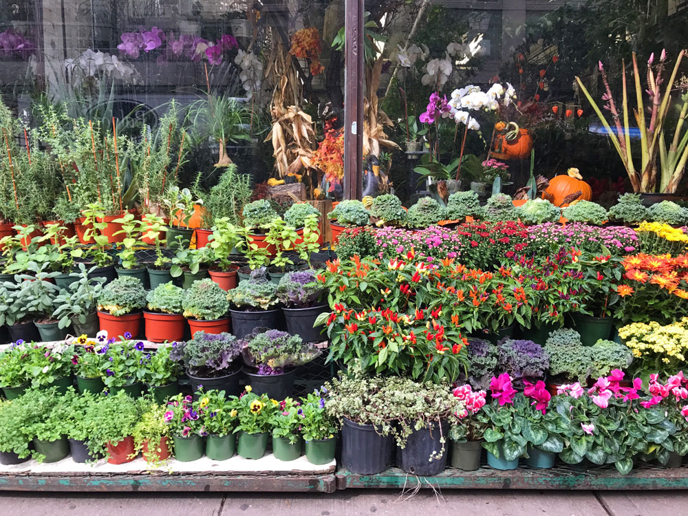 where to buy plants in NYC